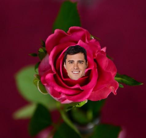 Ben in rose (1)