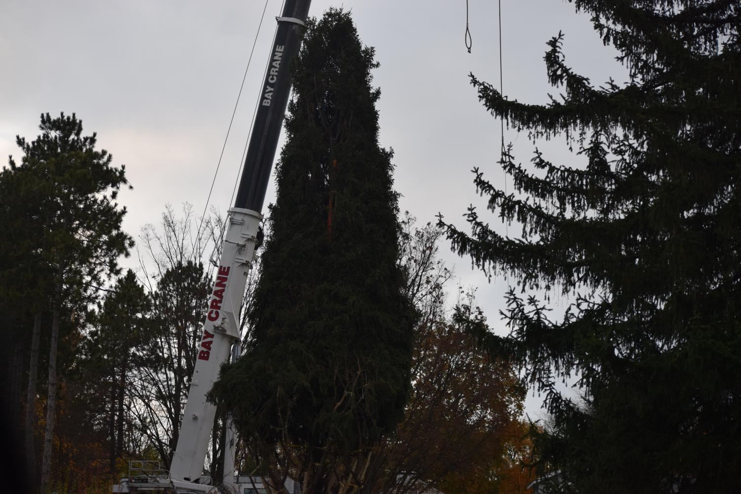 "This year's Rockefeller Center Christmas tree is cut down and wrapped up to be shipped. The tree was selected from a neighborhood in State College. ""I think it's very special to have such an important tree be chosen from our city"" Junior Phillip Vollmer said."
