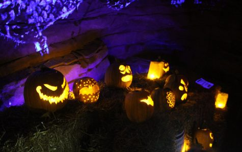 Jack-o'-Lanterns Light Up the Night at the Arboretum Annual Pumpkin Festival