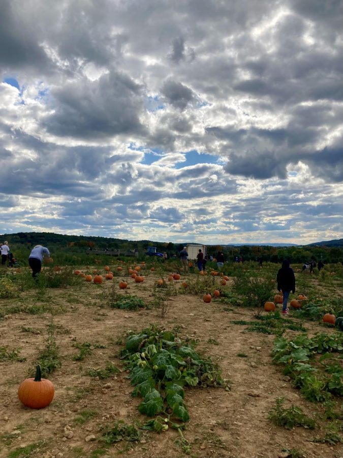 The+pumpkin+patch+at+Way+Fruit+farm+is+busy+but+not+crowded+as+a+new+tractor+pulls+up+carrying+Centre+County+residents+preparing+to+pick+pumpkins+for+the+fall+holidays.+The+patch+will+be+open+on+Fridays+and+Saturdays+for+the+majority+of+October.